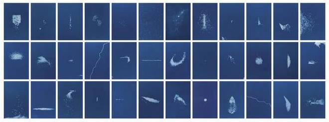 """Seeds Shall Set Us Free"" Cyanotype prints on acid free paper 13.5 x 9 inches each, series of 36 2017"